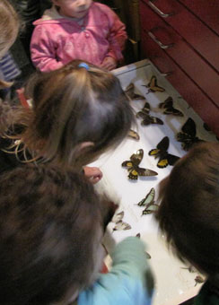 Children exploring the butteflie drawers at the South Canterbury Museum